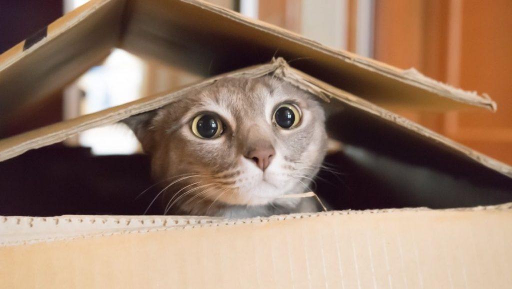 Μετακόμιση με Γάτα